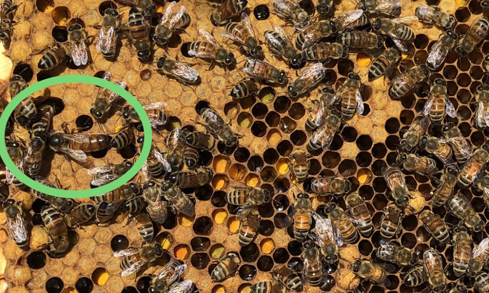 What's an Apiarist? Here's what you need to know!