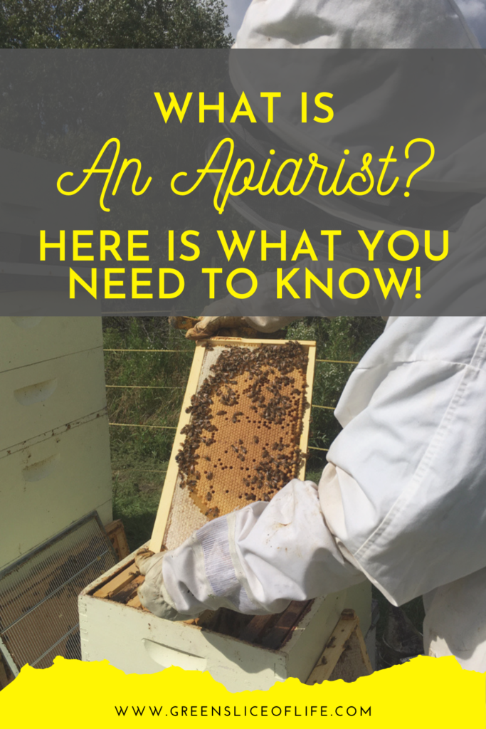 What is an apiarist? This is an image of a beekeeper's frame.